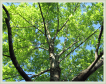 Approved Tree Care - Services